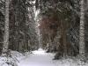 Talvine Tagamaa tee