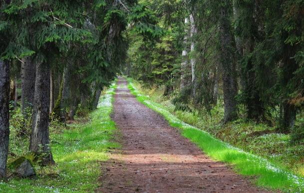 Kevadine Tagamaa tee